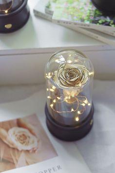 rose for ever Indoor Planters, Indoor Garden, Home And Garden, Beautiful Fairies, Beautiful Flowers, Glass Terrarium, Floating Frame, Garden Gifts, Plant Holders