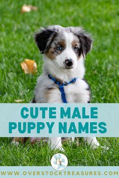 Hello pet lovers, dog lovers Are you a new pet owner? Did you just get a cute puppy or cute dog? Congrats! I created a list of unique dog names male list. You are welcome to have my wonderful list of dog names boy unique list. This list is also for dog male names for puppies. They are super cute puppy names male. I love these male dog names / dog boy unique list.#puppy #puppynames #names #dognames #dog #doglove Cute Male Puppy Names, Dog Names Male, Super Cute Puppies, Cute Dogs, Unique Cat Names, Pet Loss Grief, Famous Dogs, Dog List, Cat Memorial
