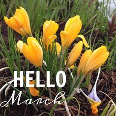 Image uploaded by Ansh. Find images and videos about march, march 2015 and hello march images on We Heart It - the app to get lost in what you love. Seasons Months, Seasons Of The Year, Months In A Year, Hello March Images, Neuer Monat, New Month Wishes, February Quotes, Birthday Poems, March Month