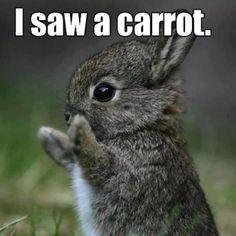 Omg a carrot !!!
