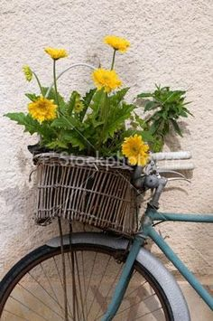Image Detail for - . flowers > yellow flowers in old wicker bicycle basket provence france
