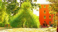 Živé stavby z vrby - vrbové stavby - Proutěné ploty a rohože na plot   Vrbové stavby - Naše realizace Living Willow, Country Roads
