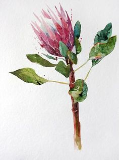 Watercolor Pictures, Watercolor Flowers, Watercolor Paintings, Watercolours, Botanical Drawings, Botanical Art, Protea Art, Australian Native Flowers, Painting & Drawing