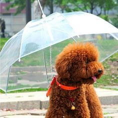 This pet umbrella with built-in leash, simply hooks onto your dog's collar. It keeps your dog dry, clean and comfortable in the rain, sleet and snow.  A great gift for your dog!