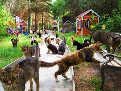 Caboodle ranch – cutest cat village in the world!