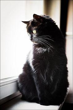 ❤️ BℓαᏣƙ =^.^= CÅt§ in The Window ❤️