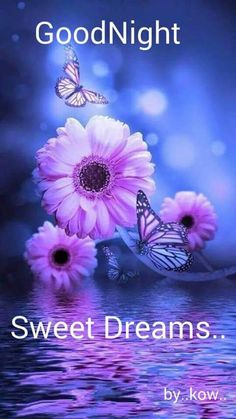 Good Night and Sweet Dreams! God bless you. Butterfly Background, Butterfly Wallpaper, Butterfly Art, Flower Backround, Beautiful Flowers Wallpapers, Beautiful Butterflies, Cute Wallpapers, Good Night Image, Good Morning Good Night