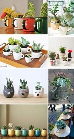 Cactos e Suculentas na Caneca Fun containers to give succulents a life of their own. The post Cactos e Suculentas na Caneca appeared first on Best Of Likes Share.Teacup Mini Gardens Ideas to cOne day I hope to have a colleIdeas que mejoran tu vidaThe Succulent Gardening, Cacti And Succulents, Planting Succulents, Planting Flowers, Propagating Succulents, Succulent Terrarium, House Plants Decor, Plant Decor, Indoor Garden