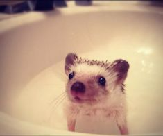 This little fellow actually seems to like taking baths.
