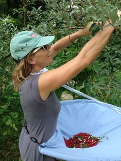 Berry- (and whatever else!-) picking apron to make for the serious, two-handed forager or harvester.: