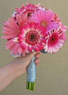 Gerber Dasies. each bridesmaid walks down with a lighter shade of pink then my bouquet mixes everyones flowers w/white flowers. ombre bouquets #DBbridalstyle