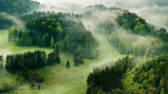 Secluded in the Woods by *JindrichLisy