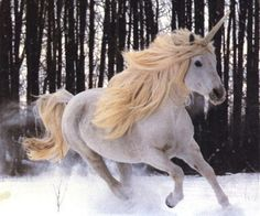 The Unicorn...the beautiful white horse with the magical horn that heals. --Author Unknown--