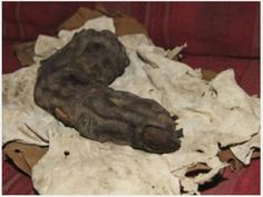 15 inch long human finger found in Egypt. Person that it came from had to be 16 ft. Tall. The fingernail is clearly visible.