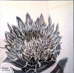 Hermien Van Der Merwe; Title: Fynbos:  Kroonblare (Crown Petals) Medium: Pen-and-Ink drawing on paper with oil paint background Size: 200 x 200mm