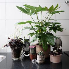 My own plantgang for Urbanjunglebloggers on visualstrands.com