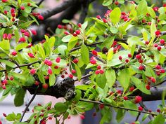 Remembering Boston: Spring Bloom
