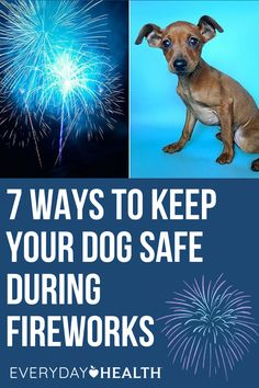 Summer means fireworks, so learn how to keep your dog safe.