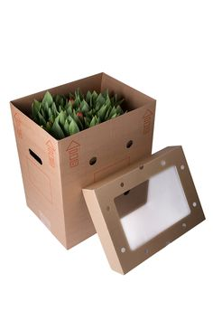 #packaging #flowers #aquabox
