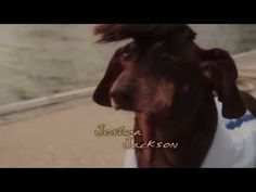"Here's ""Dawson's Creek,"" But With Daschunds"