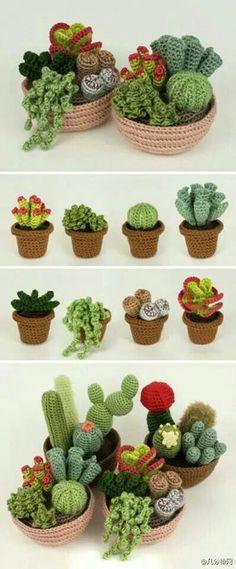 Kaktuksia ja mehikasveja, facebookista bongattu