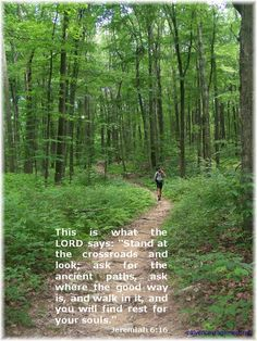 Images from the Appalachian Trail | Appalachian Trail, Berks County, PA 7/1/11