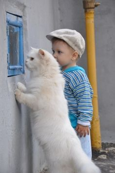 inquisitive boy with inquisitive cat