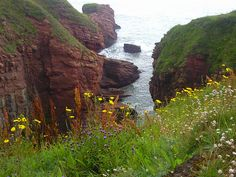 Looking down to Arbroath Cliffs in Scotland through wild flowers Cairngorms National Park, Dundee, Ireland Travel, Nature Scenes, Dream Vacations, Outlander, Trip Planning, Wild Flowers, Travel Photography