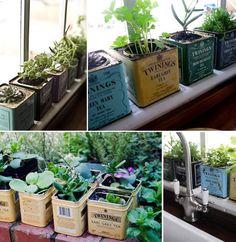 Vintage Twinings tea tins as plant pots
