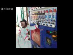 Japão: macaco compra bebidas em parque safari e devolve o troco para os visitantes   Portal Mie - Notícias e eventos do Japão