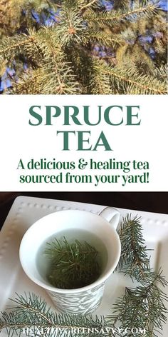 Spruce tea is a delicious medicinal brew you can make all year round, even in the dead of winter. Learn why you might want to start sipping this tasty foraged tea regularly! Home Remedies For Uti, Cold Remedies, Natural Health Remedies, Natural Cures, Natural Healing, Herbal Remedies, Natural Beauty, Natural Skin, Green Living Tips