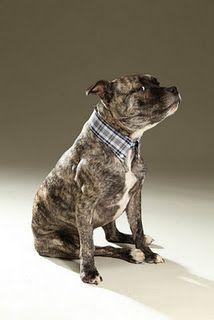 love his collar!