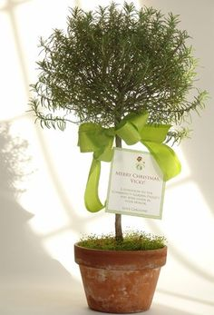 hostess gift idea: rosemary topiary with donation card attached