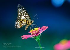 lime butterfly by hiefadpuiq. @go4fotos