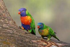 By Eu amo pássaros