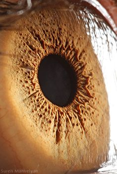 Extreme close-up of a human eye by Suren Manvelyan, a physics teacher from Yerevan, Armenia.