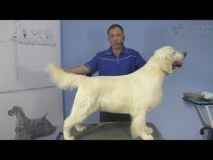 Pro Groomer - Golden Retriever Grooming Guide - YouTube