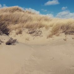 dunes....