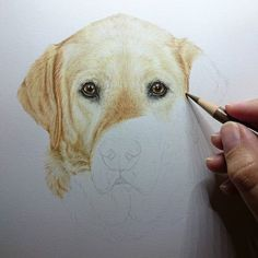 Progress on lovely Lady, about halfway now. #labrador #lab #labradorretriever #yellowlabrador #dog #animalart #petportrait #art #artist #dogportrait #draw #paint #create #pets #cute #love #animals