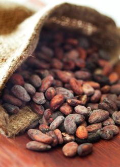 """It was in 1753 that the botanist Carolus Linnaeus named the cacao tree Theobroma Cacao, meaning """"Food of the gods""""."""
