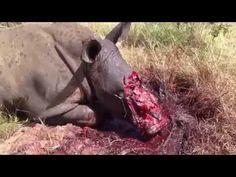 Hunting + Poaching? It's still violence
