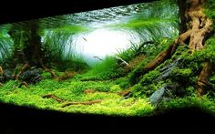 Planted aquarium - Not one of mine. But look at how amazing aquascaping can be! Planted Aquarium, Diskus Aquarium, Aquarium Terrarium, Nature Aquarium, Tropical Aquarium, Aquarium Design, Tropical Fish, Colorful Fish, Aquascaping