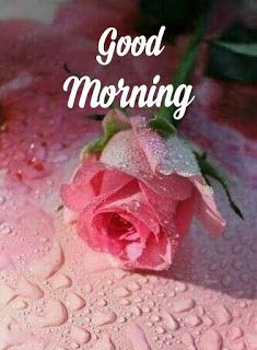 Beautiful good morning images with flowers Good Morning Love Text, Good Morning Monday Images, Good Morning Friends Images, Good Morning Beautiful Pictures, Good Morning Image Quotes, Good Morning Photos, Good Morning Good Night, Morning Quotes, Morning Messages