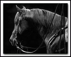 Distant Gaze - Scratchboard Horse