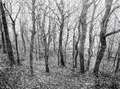 Sarah Woolfenden #tree #art
