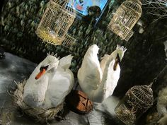 News and updates - The Taxidermy Emporium