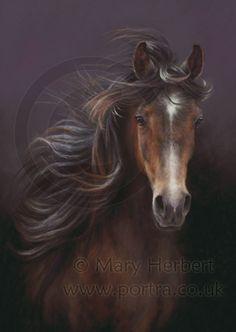 Arabian horse portrait by Mary Herbert
