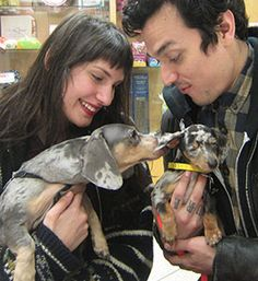 Dachshunds puppies rescued from hoarding situation and find new loving homes - way to go ASPCA !