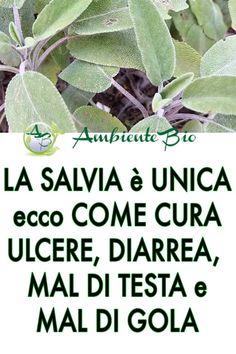 Salvia, In Natura, Medicinal Plants, Natural Medicine, Kraut, Plant Care, Natural Living, Real Food Recipes, Health And Beauty