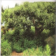 Edible Forest Gardens: FruitTree Guilds